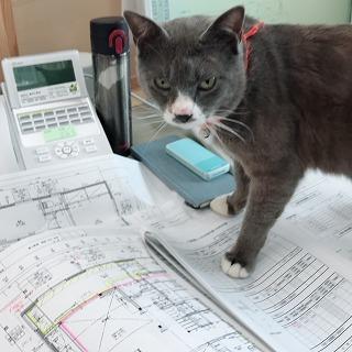 工務店看板猫