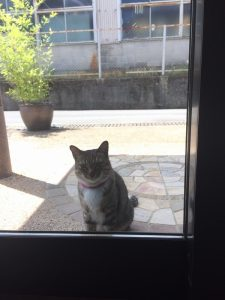 工務店猫先代ニャン