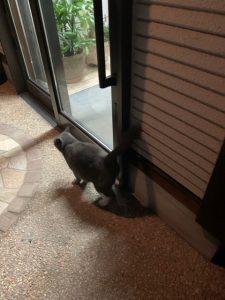 工務店猫グー