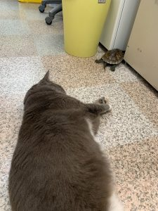 事務所猫と亀