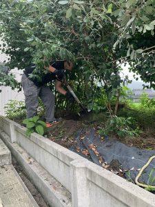 植木掘り起こし