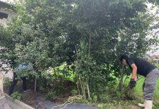 植木の掘り起こし