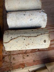シロアリの蟻道